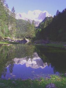 www.gosaunet.at - Botanische Wanderung mit Dr. Robert
